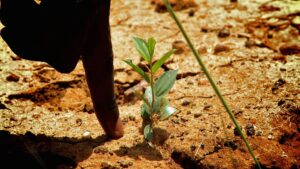 ecosia plant