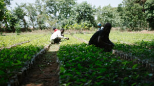 ecosia plantaža